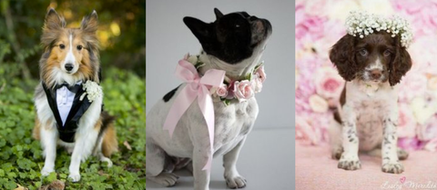 How to Include Your Dog in Your Wedding (& Photos of the 9 Cutest Wedding Dogs!)