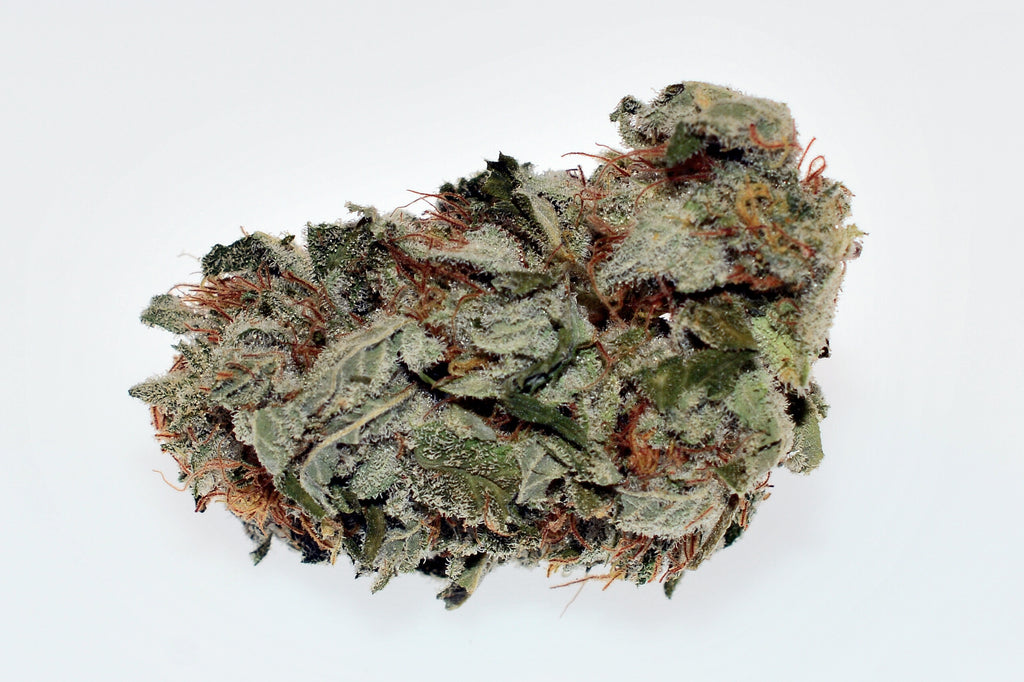 Hybrid - Blue Russian (Exotic)