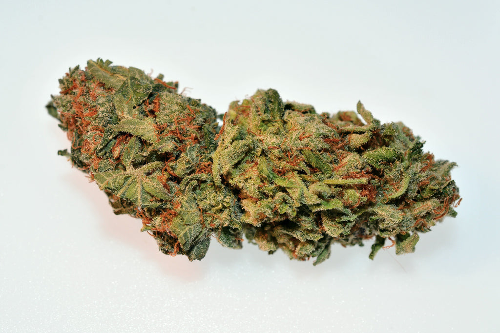 Indica - The Assassin (Exotic)