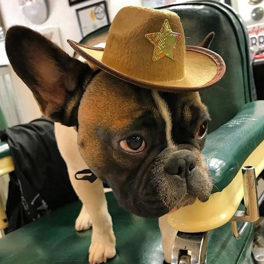 Dog wearing a cowboy Hate on a green barber chair