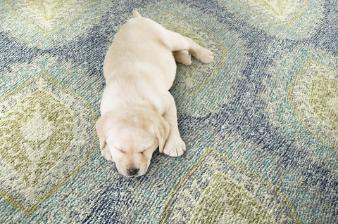 Pet-Friendly Rugs