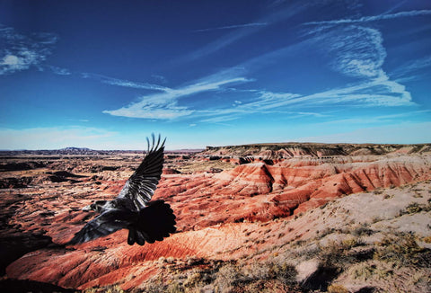 Red Rocks. Black Bird