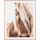 Middle of Nowhere Artwork Highland Equine Print