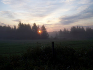 Spring sunrise over a country meadow - a peaceful, serene setting.