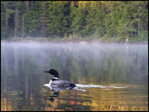 Loon's Lament