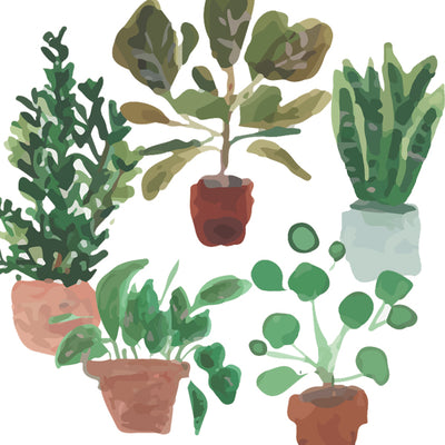 Care Guide for 5 Popular House Plants