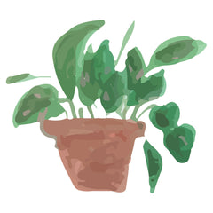 Philodendron-Plant-care-guide