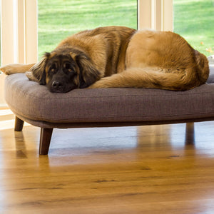 What is an Orthopaedic Dog Bed?