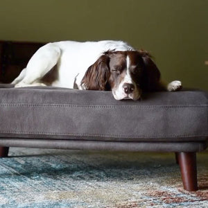 Why Not Become A Berkeley Cole Orthopaedic Dog Bed Tester?