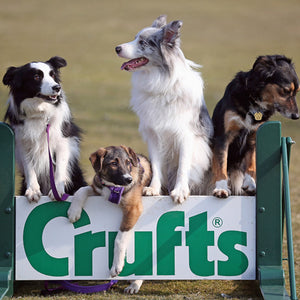 Crufts 7-10 March 2019 - My Favourite Dog Show Of The Year