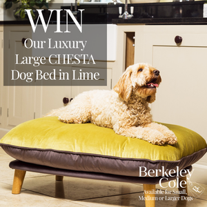 Competition time. Win a Berkeley Cole dog bed