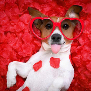 Valentines Day Promotion - 60% Off! - Berkeley Cole Luxury Dog Beds