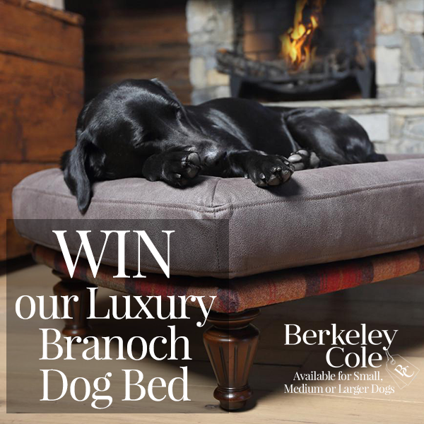 Win a Branoch Berkeley Cole luxury dog bed