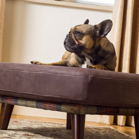 French Bull dog loving his Branoch luxury orthopaedic dog bed from Berkeley Cole