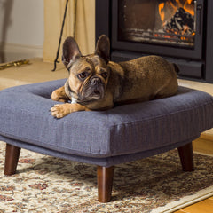 French Bulldog getting comfy on his Malvern Dog Bed from Berkeley Cole