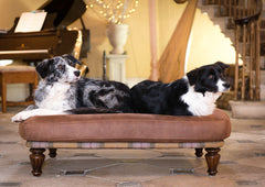 Two collies sharing the Branoch Luxury Dog Bed for large dogs in Rhubarb Crumble