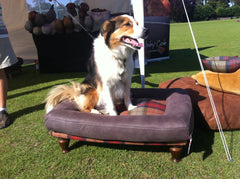 Berkeley Cole luxury pet furniture, the home of luxury dog beds, attends the Poulton Village fete