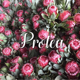 Resendiz Brothers: The Protea Connoisseurs