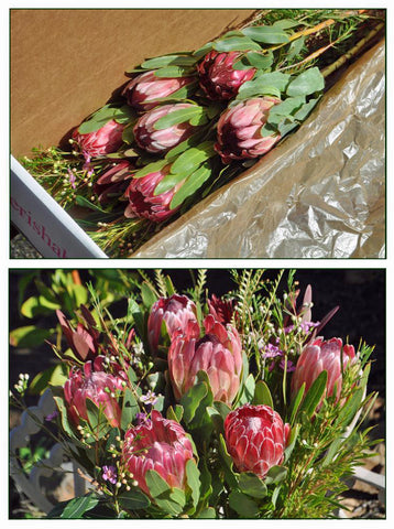 Gift Box - 6 Protea Blooms