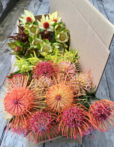Gift Box - Pincushion & Leucadendron