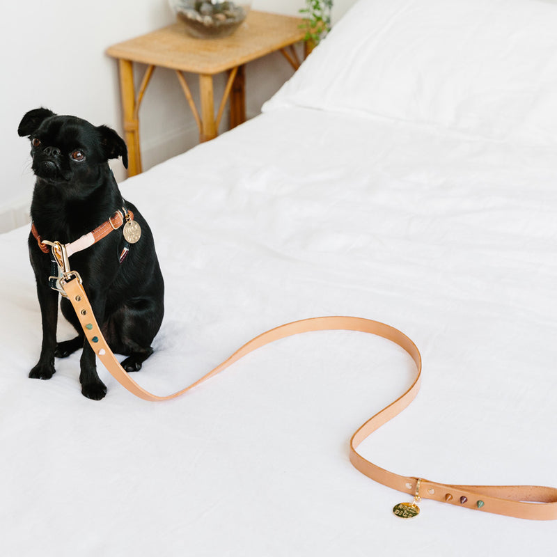 Spike Leather Dog Leash - Forest Tan