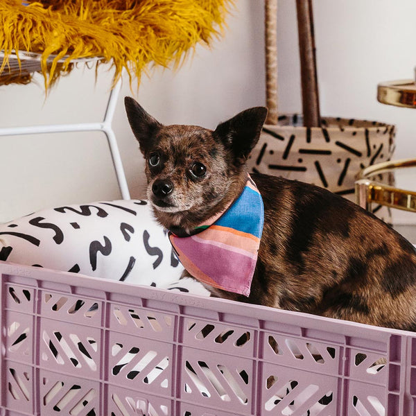 Easy Tiger Dog Bandana - Pink