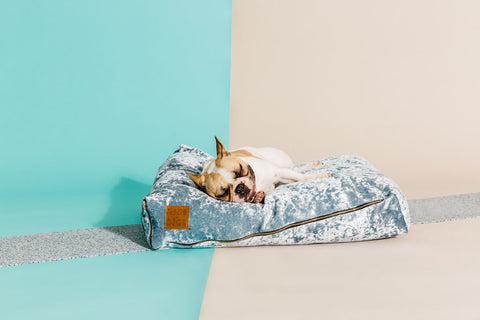 Velvet Slouch Dog Bed - Mirage