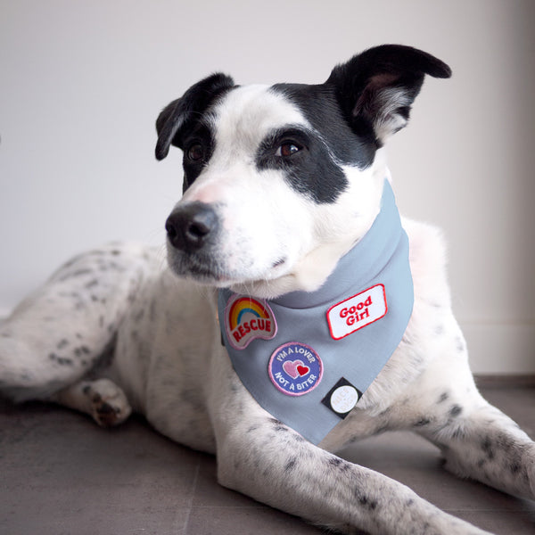 Light Chambray Dog Bandana
