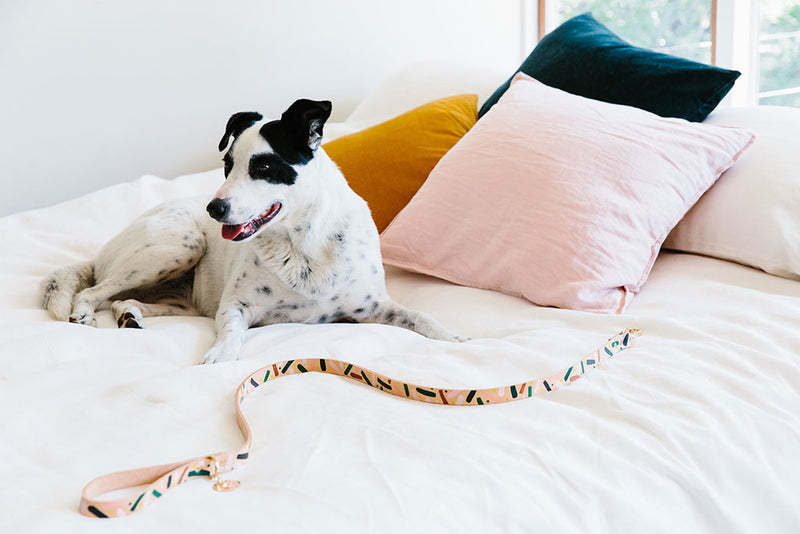 Master Confetti Leather Dog Leash