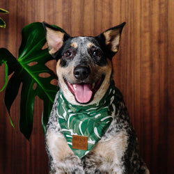 Monstera Dog Bandana