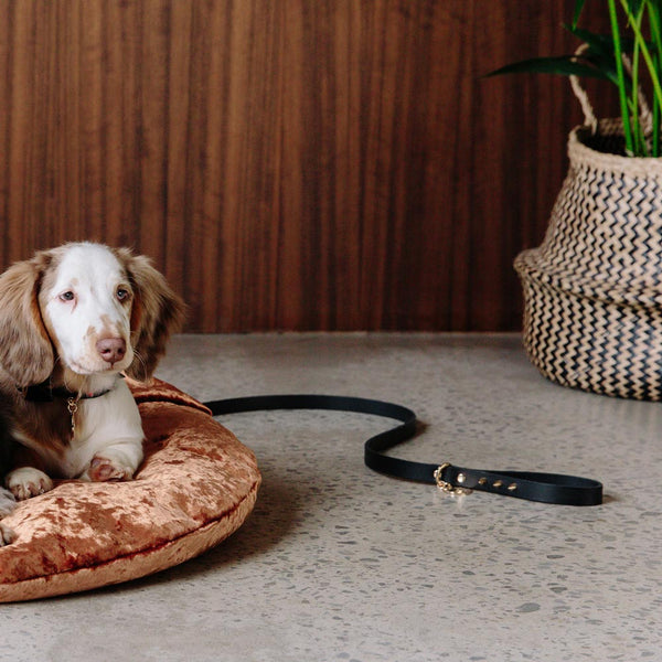 Spike Leather Dog Leash - Gold Noir