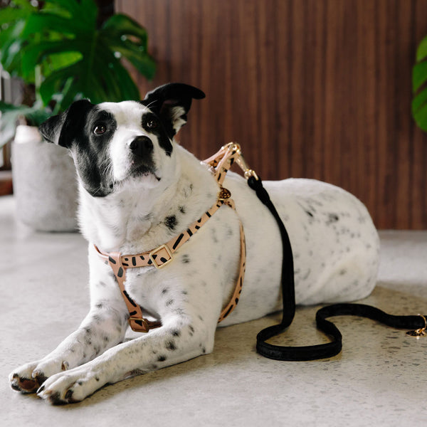 Tiggy Leather Dog Harness - Black