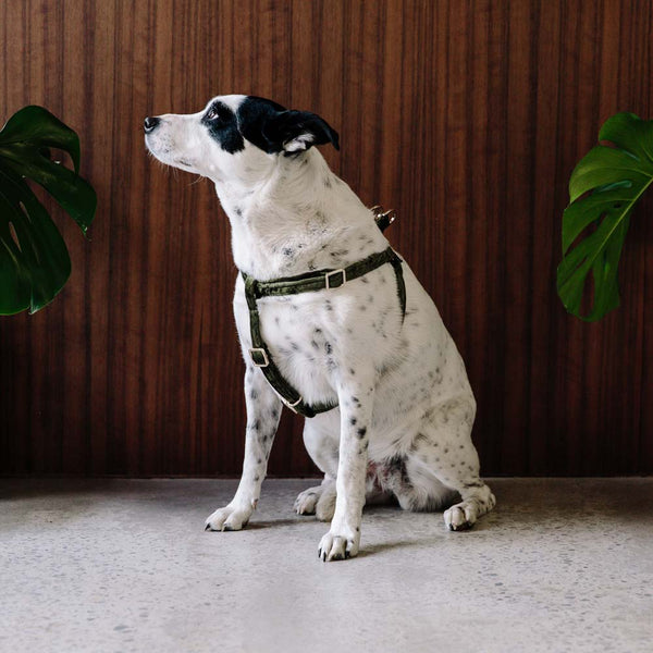 Velvet Dog Harness - Evergreen