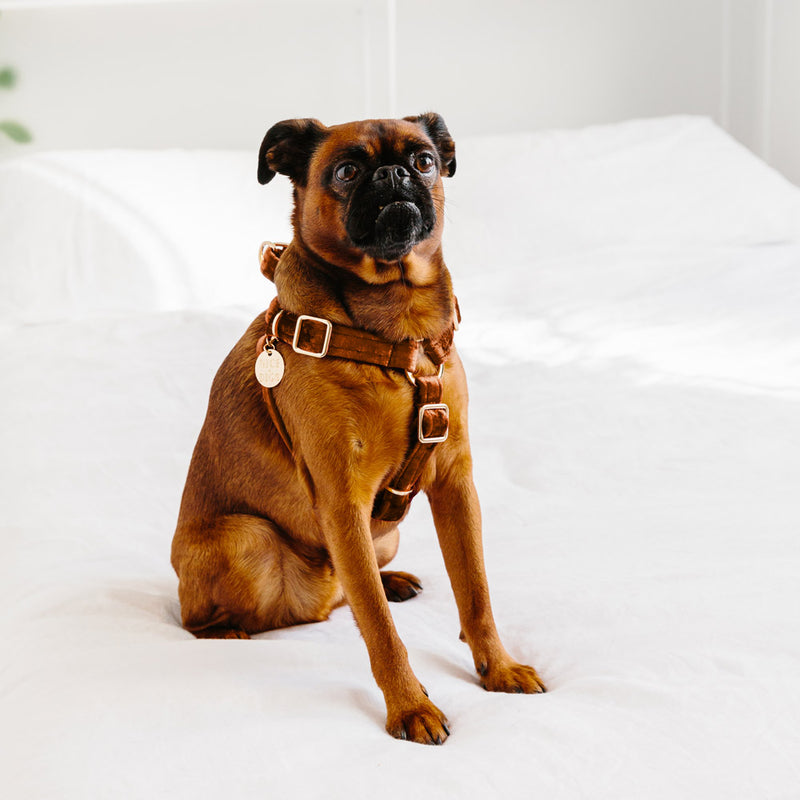 Velvet Dog Harness - Copper