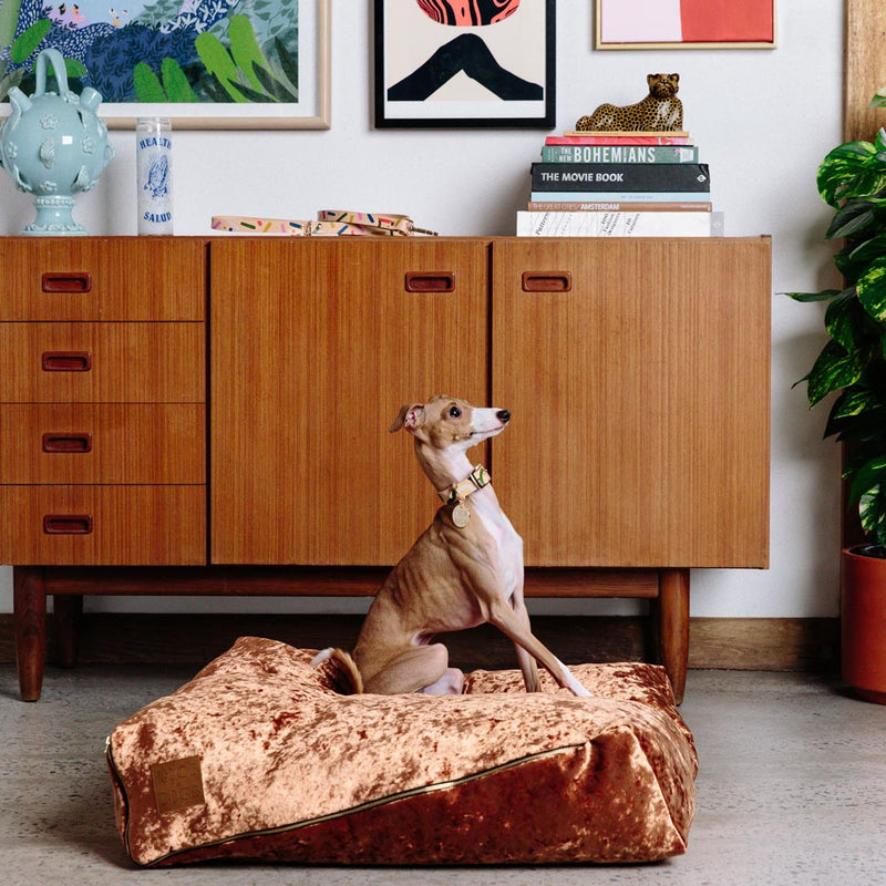 Velvet Slouch Dog Bed - Copper