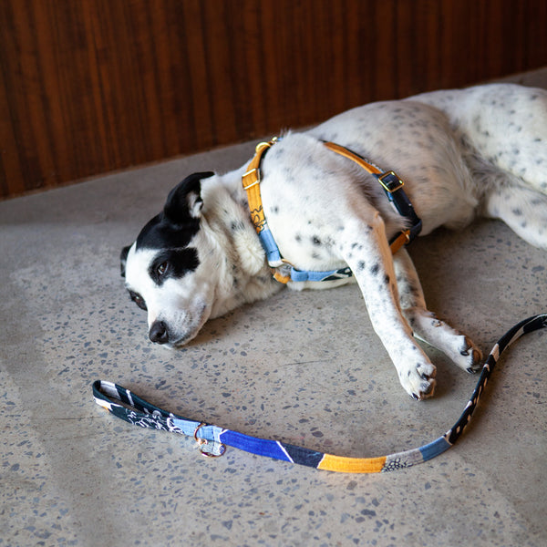Out Of The Rubble Printed Leash