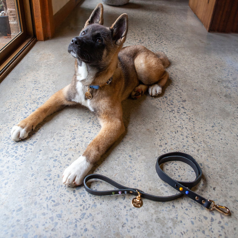 Smooth Spike Leather Dog Leash - Rocky Noir