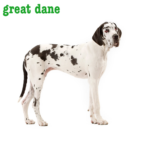 Great Dane Collection