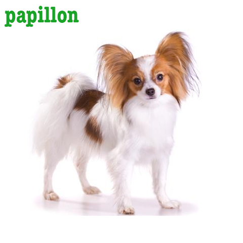 Papillon Collection