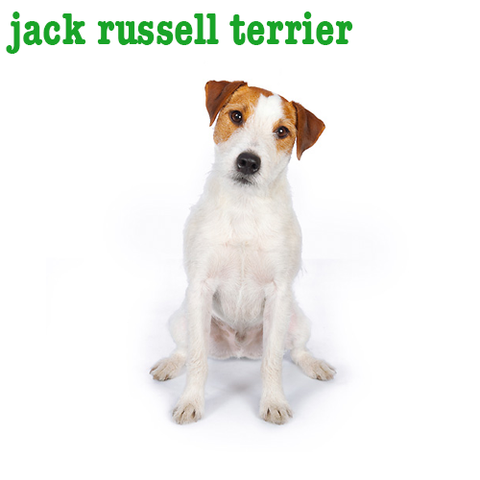 Jack Russell Collection