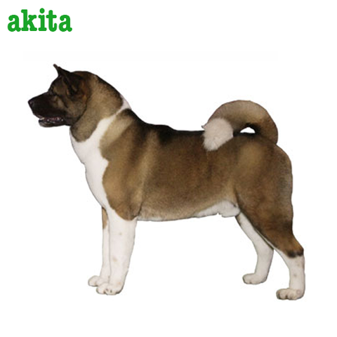 Akita Collection