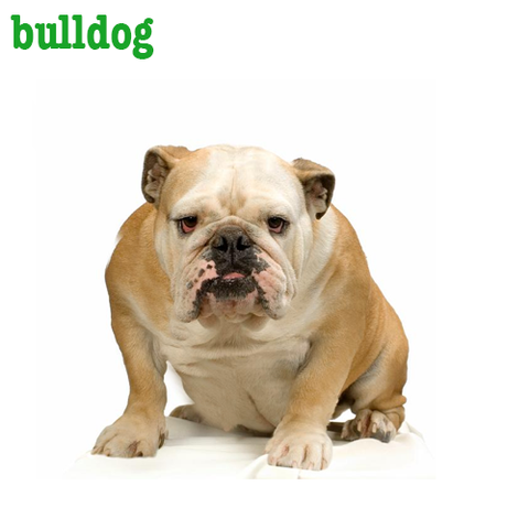 Bulldog Collection