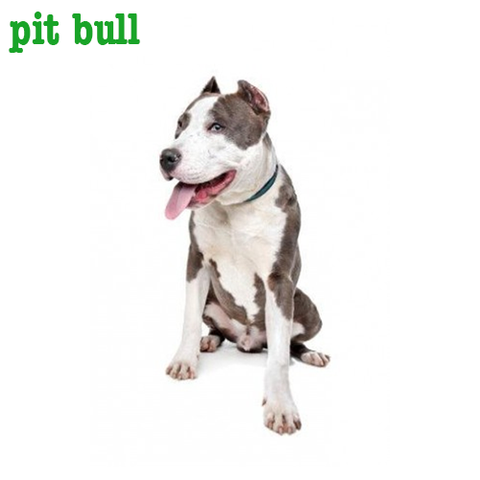 Pit Bull Collection