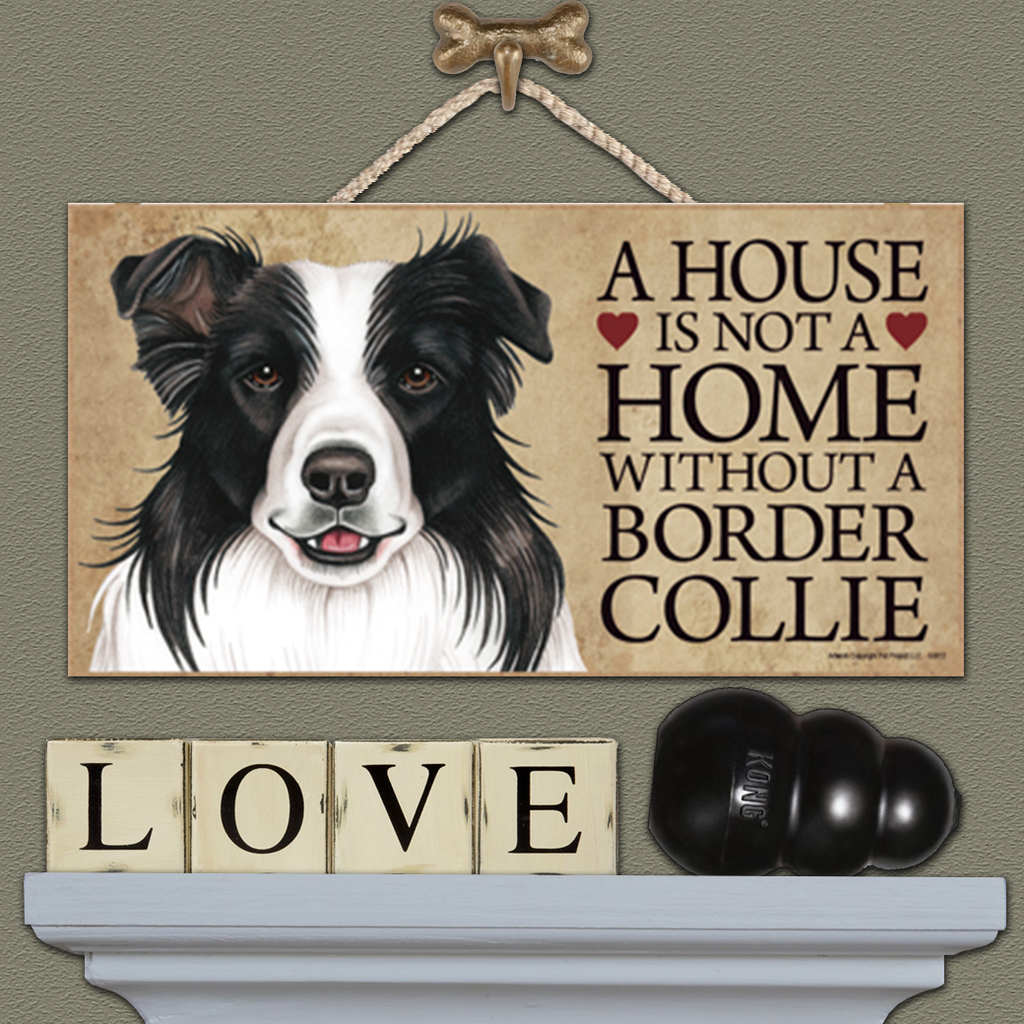A House is Not a Home - Border Collie