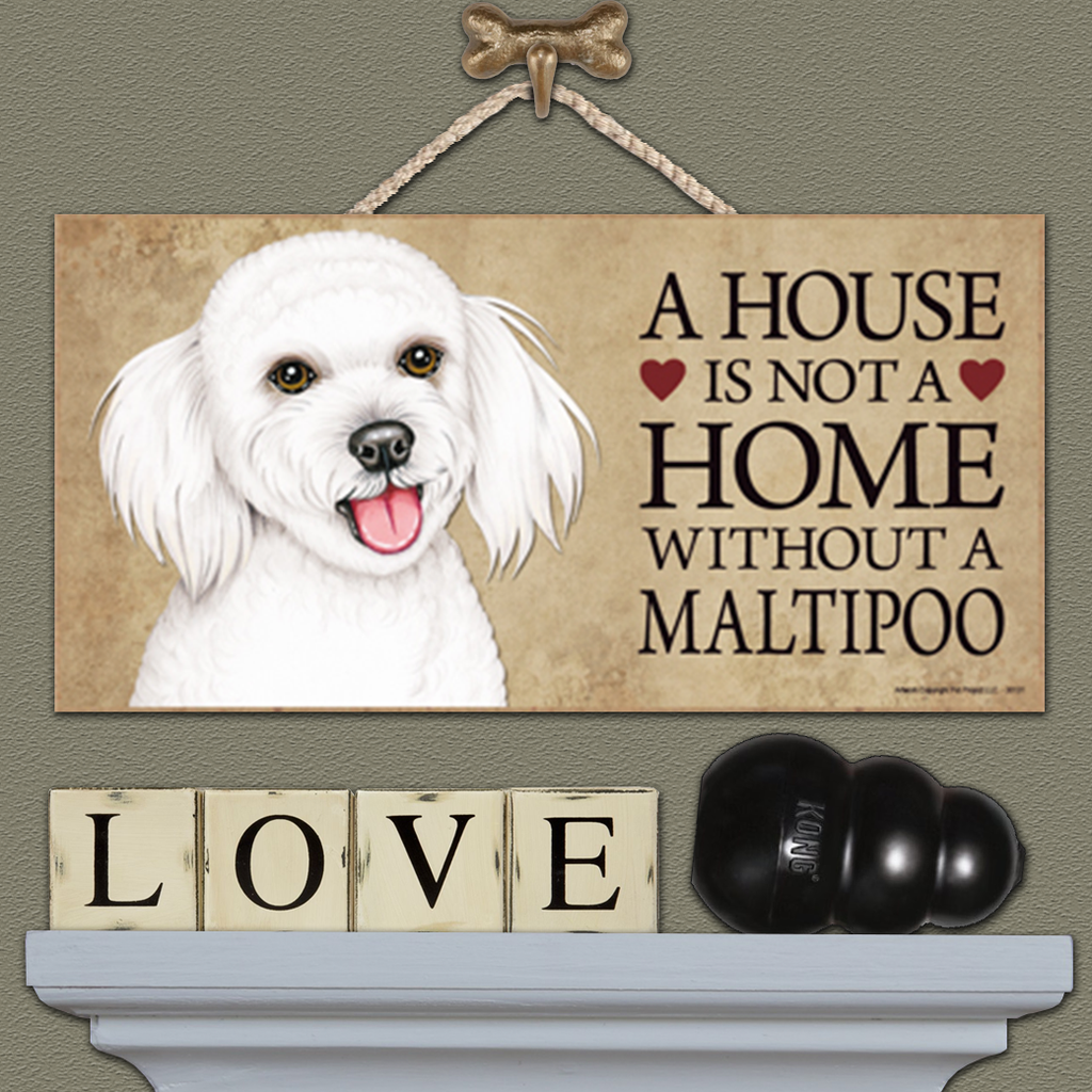 A House is Not a Home - Maltipoo