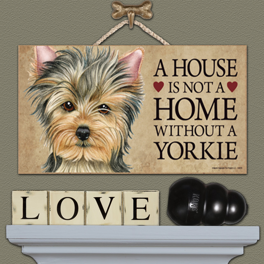 House is Not a Home - Yorkie