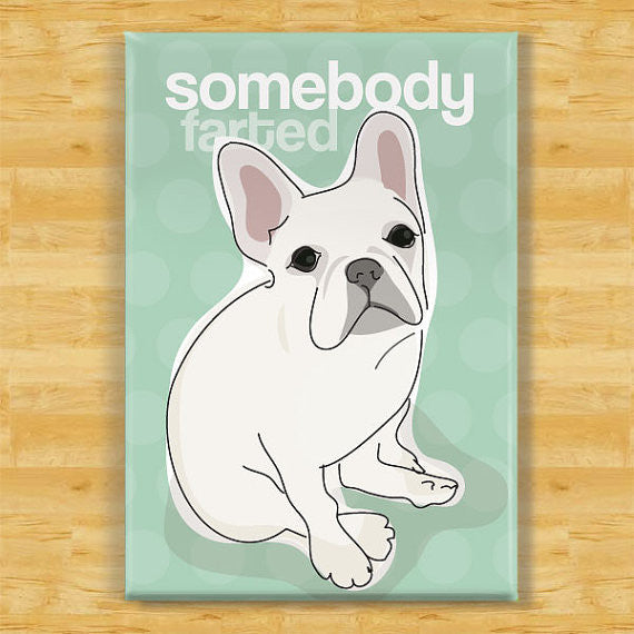 Funny Magnet French Bulldog - Somebody Farted - White French Bulldog