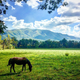 Nashville Picture Magnets | Horse In Pasture