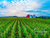 Nashville Photography Magnet | Corn Field