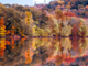 Photo Magnets | Radnor Lake Beauty